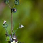 weed flower.jpg