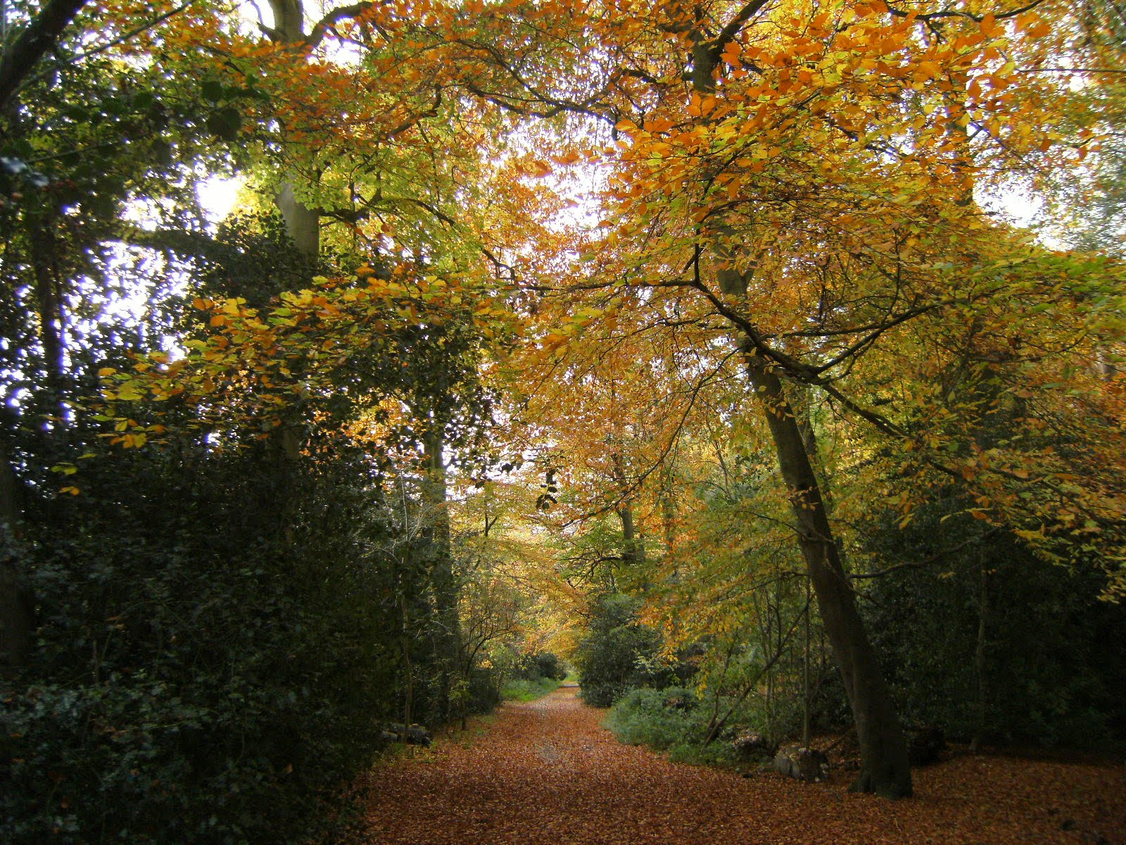 1011040002 Autumn colours in Bisham Woods