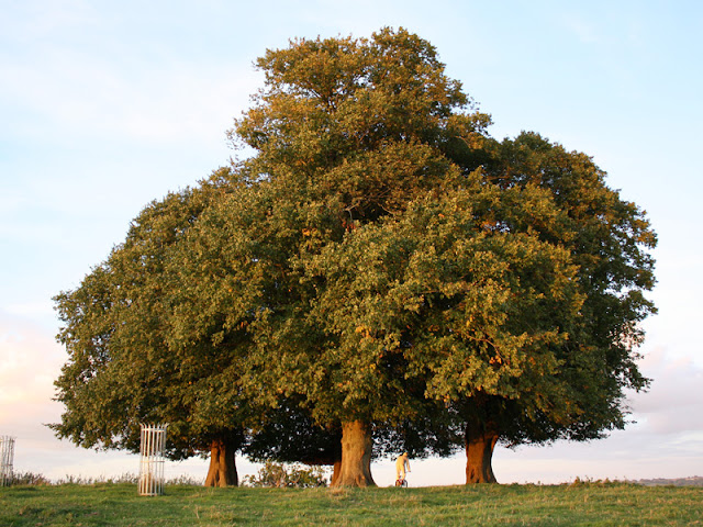 Yeovil - Anglia