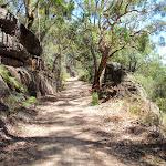 Wide trail (219485)