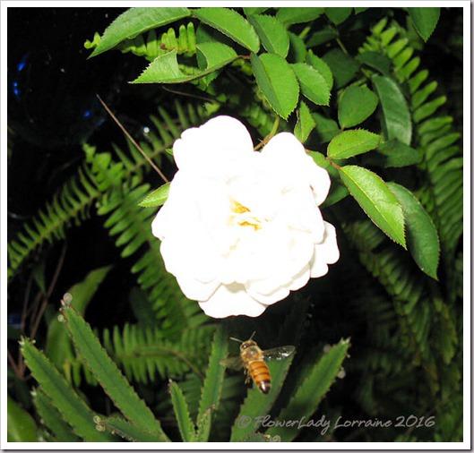 10-11-bee-prosperity