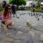 Iguanas walking about in Guayaquil