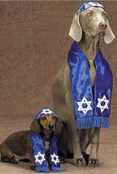 perro judío