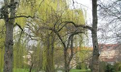 Jardín Vojanovy sady (Parque Vojan)