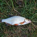 20140906_Fishing_Lysyn_019.jpg