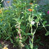 Gardening 2010, Part Two - 101_3027.JPG