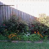 Gardening 2013 - 115_5364.JPG