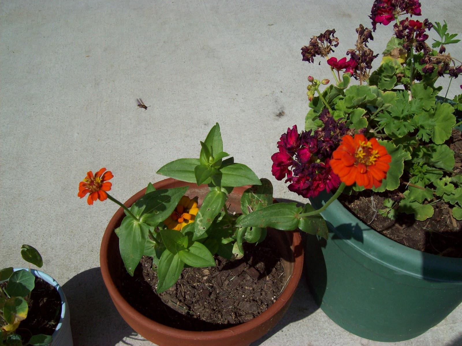 Gardening 2009 - 101_3797.JPG