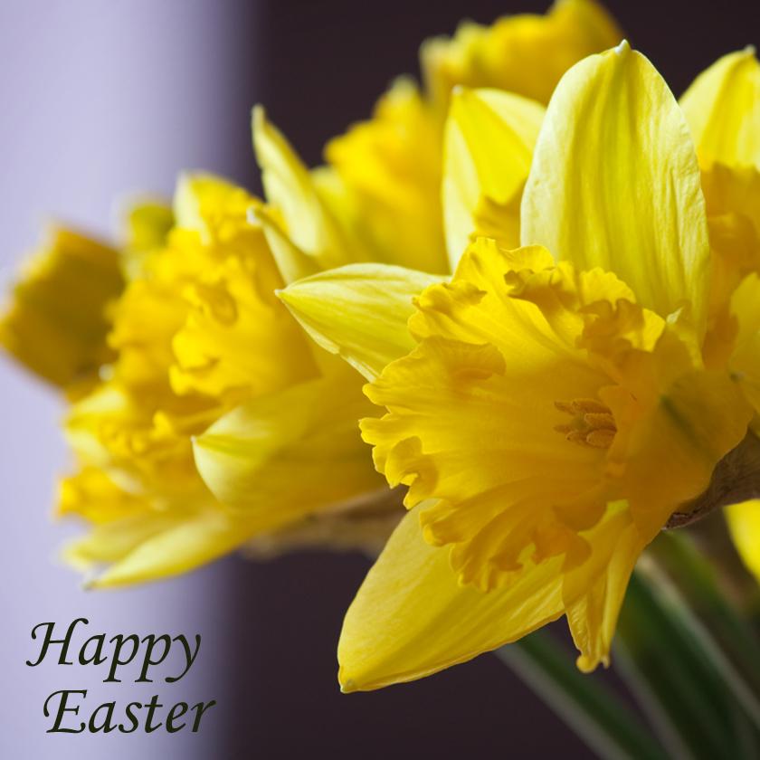 https://lh3.googleusercontent.com/-oJa3i1RS4zo/TW-c600ElqI/AAAAAAAAAQU/EHKIGPWQ2rg/s1600/Easter+Card.jpg