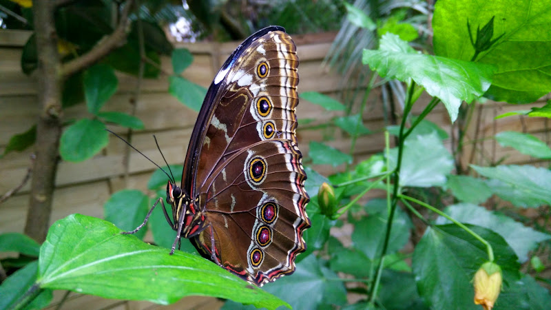 Schmetterling in Wittenberg