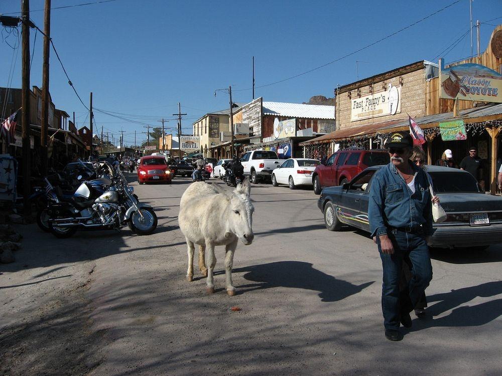 burros-oatman-1