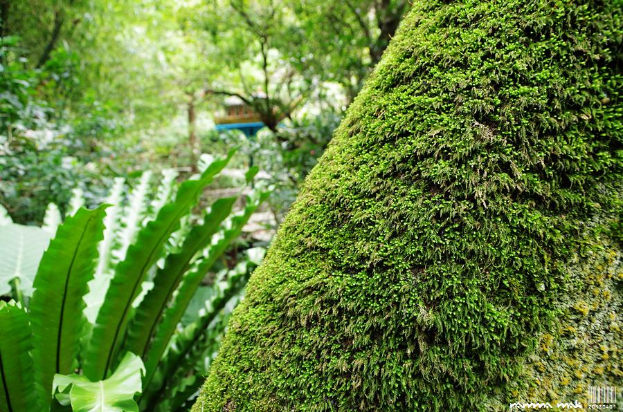 苔蘚和蕨類的植物處處,很原始的感覺!