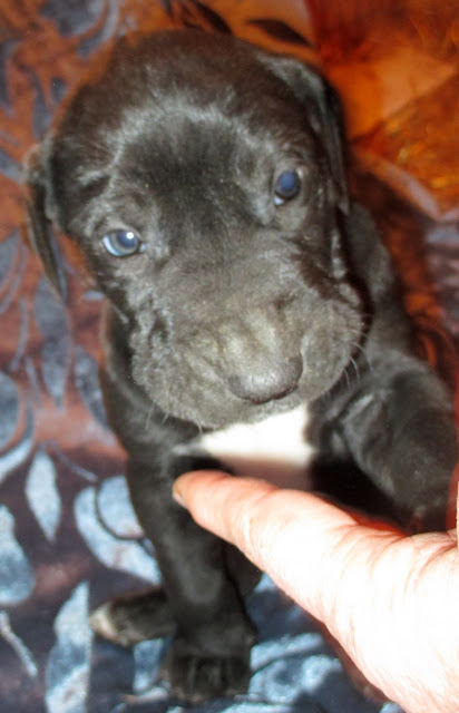 Sherlock Spratt @ 5 weeks
