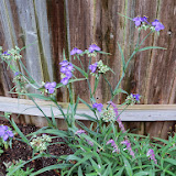 Gardening 2014 - 116_1795.JPG