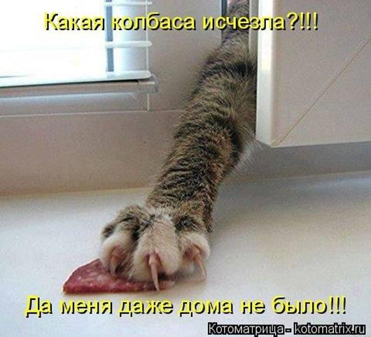 1483107308_kotomatricy-3