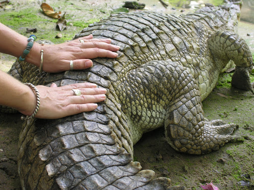 Crocodile Love: Unusual People Who Made Remarkable Trips