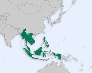 Association of Southeast Asian Nations location map