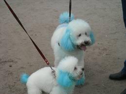Blog De Perros Miniaturas Caracter Temperamento Y Comportamiento