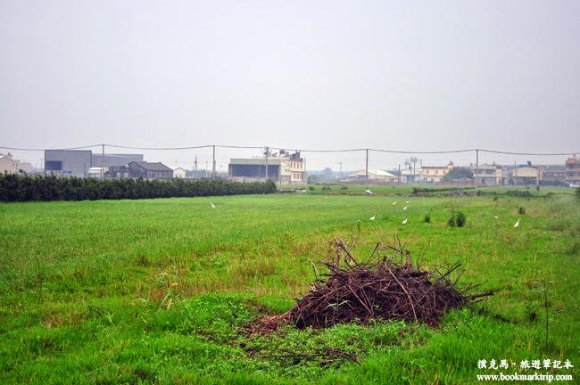 福寶乳牛彩繪村白鷺鷥