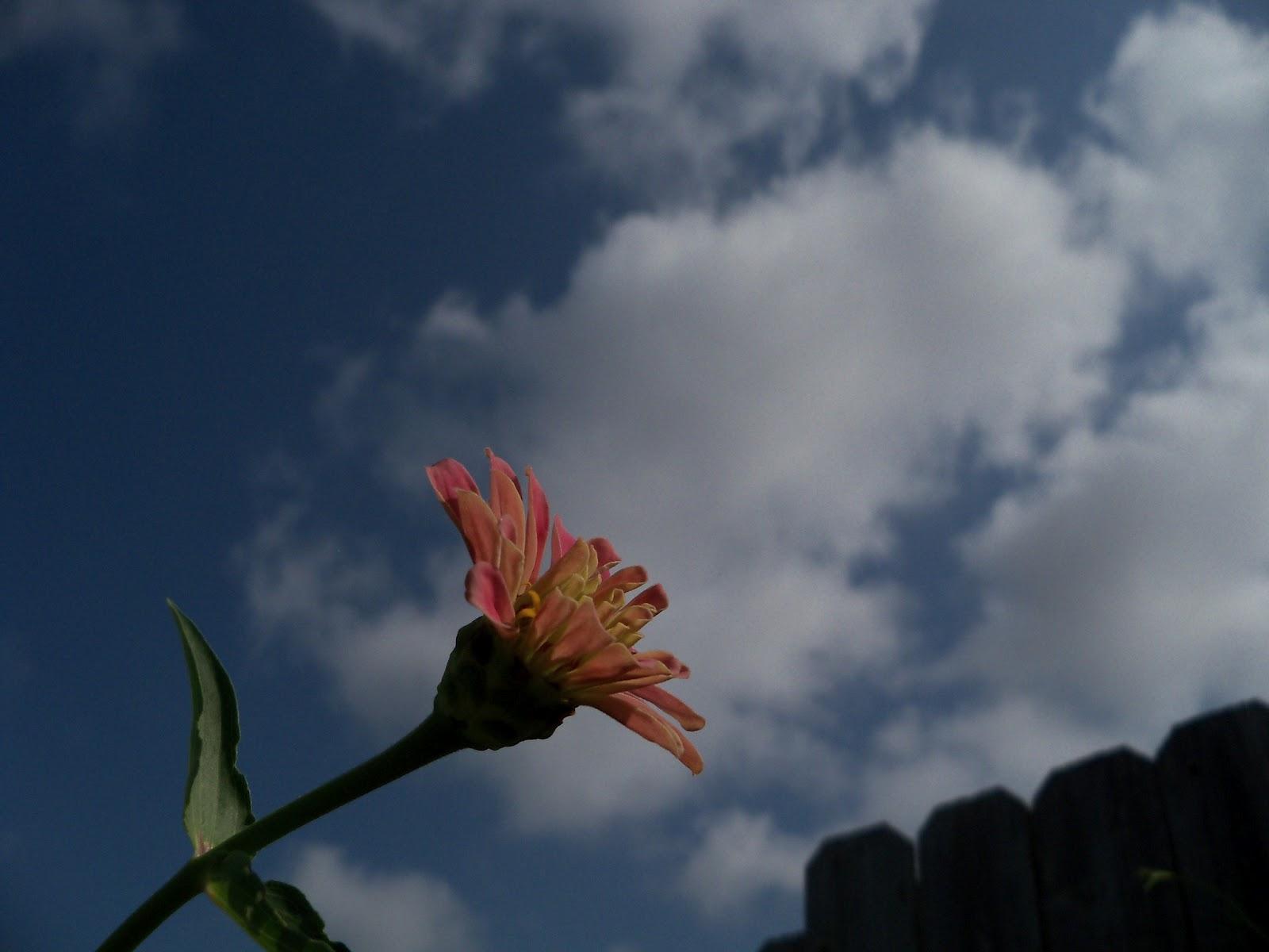 Gardening 2011 - 100_0096.JPG