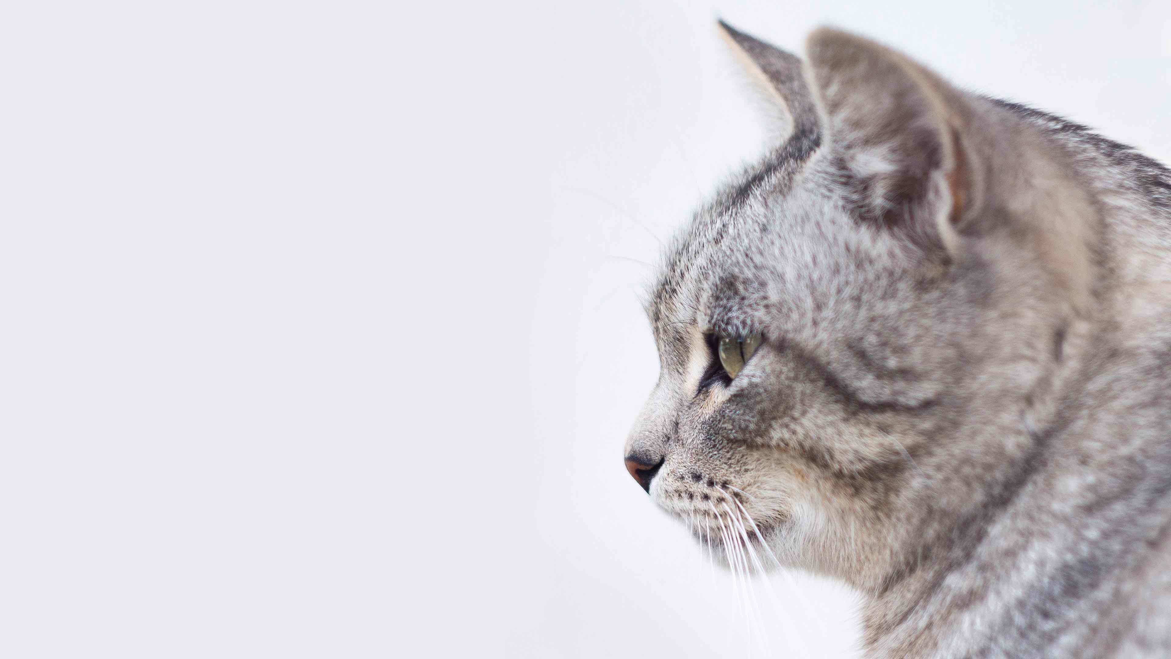 Imagenes muy lindas de gatitos4