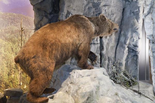 Tra pavia e bratislava miracolo della natura for Affitti cabina grande lago orso