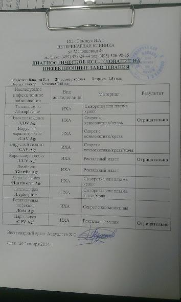 Москва, Тайшет, кобель 08.08.12 - Страница 3 IMAG0924
