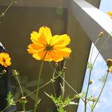 Gardening 2012 - IMG_3791.JPG