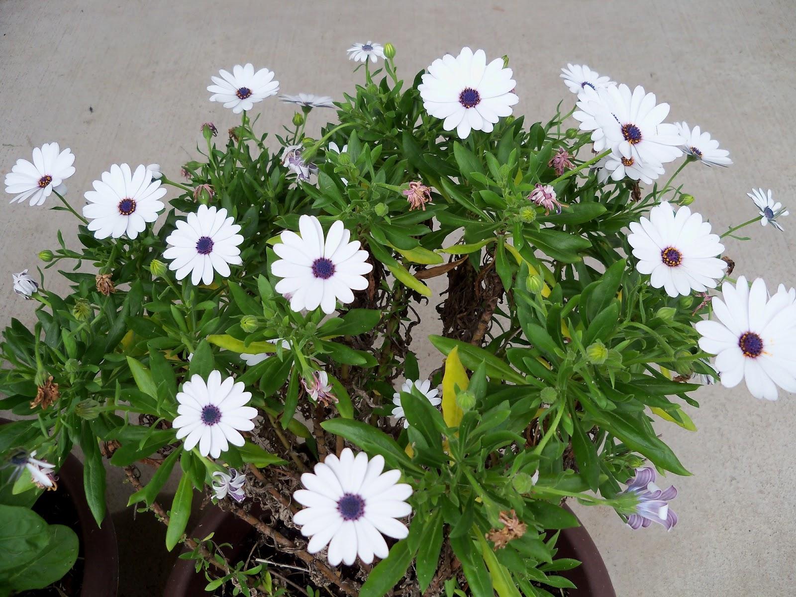 Gardening 2012 - 115_1418.JPG