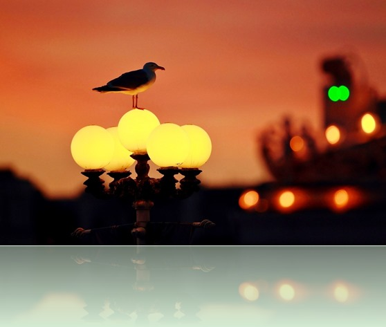 nature-citynight-city-seagull-bird-lantern-lights-bokeh
