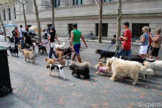 Photo: New York (USA) - Dog-sitting
