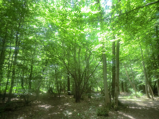 CIMG5653 Into Coomb Wood
