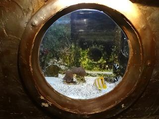 2016.03.14-031 poissons