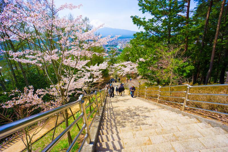 新倉富士浅間神社 桜 写真14