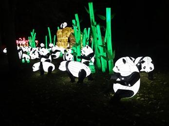 2018.12.03-075 grands pandas