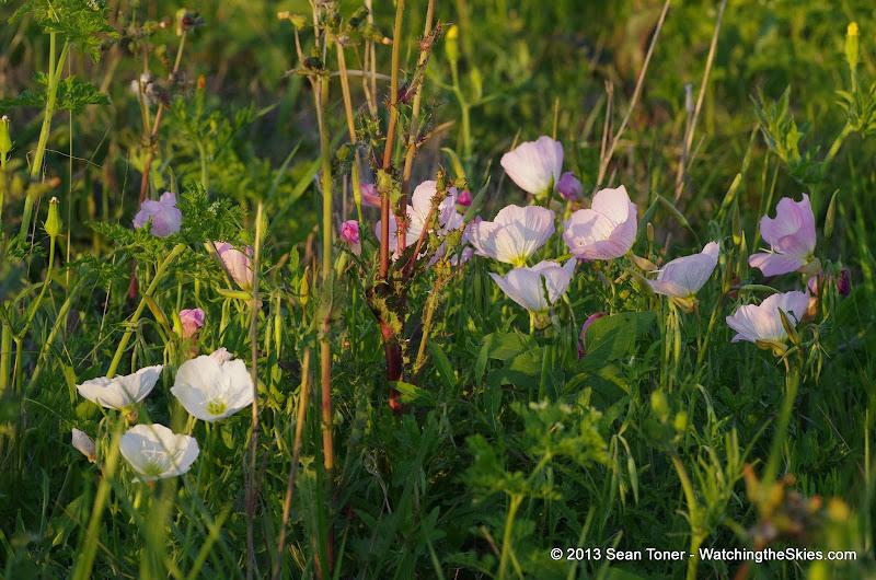 2013 Spring Flora & Fauna - IMGP6336.JPG