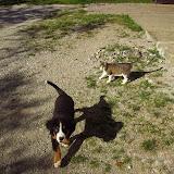 Domače živali-home animals - BILD060612.jpg