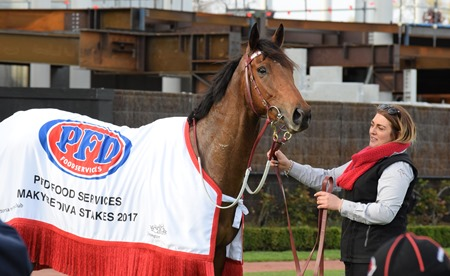 makybe diva stakes_humidor 8