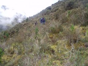 voyage : yves grangier au Pérou à la recherche de sphaigne