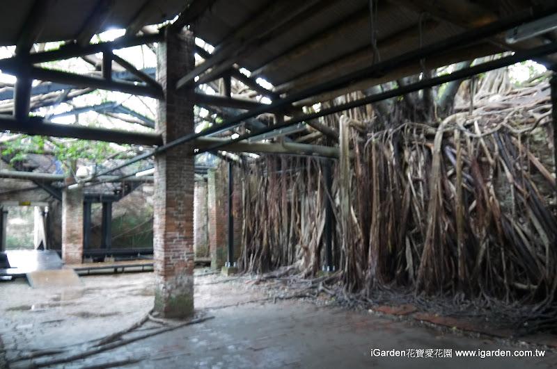 迷你版柬埔寨塔普崙寺 | iGarden花寶愛花園