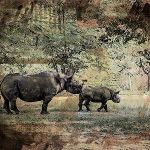 Img_0241_Rhino and Baby_Textured.jpg