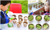 Growing Watercress with Kids at Home