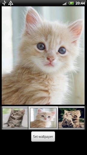 可愛的小貓高清壁紙