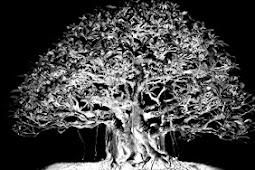 Misteri Pohon Dekat Mushala