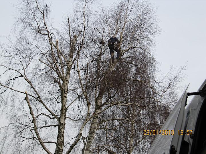 bomen snoeien en kappen - IMG_0215.JPG
