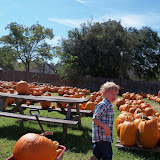Pumpkin Patch 2015 - 100_0413.JPG