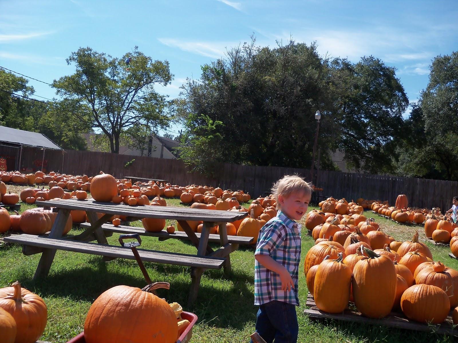 Pumpkin Patch 2015 - 100_0413.JPG