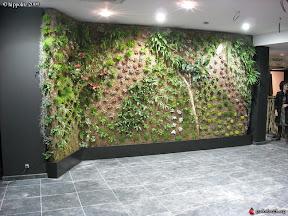 _RESTAURANT MA DINETTE SITUE A AGROPARC A AVIGNON mur végétal réalisé en sphaigne du chili