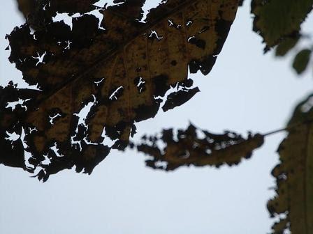 осень листья