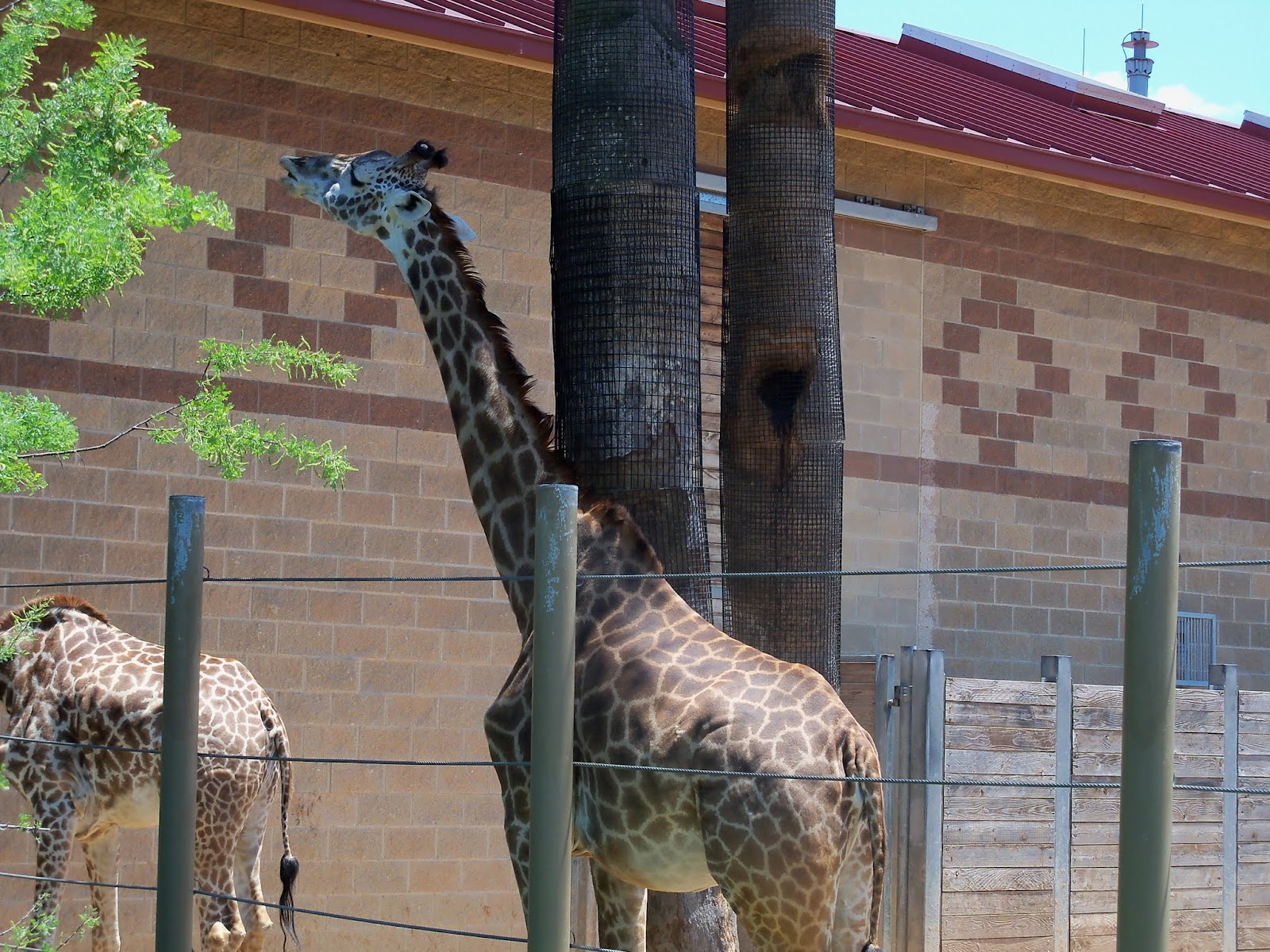 Houston Zoo - 116_8542.JPG